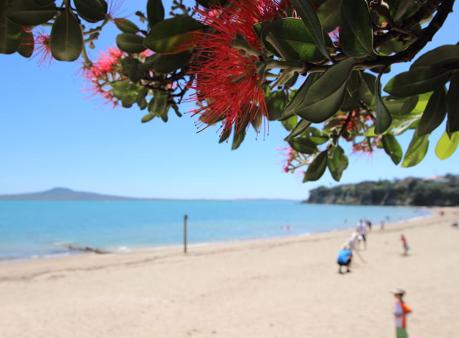 Typical summer on St Heliers beach.