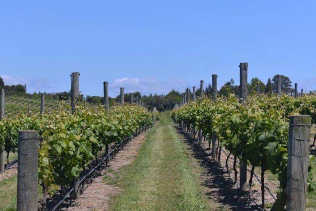 Surrounding vineyard