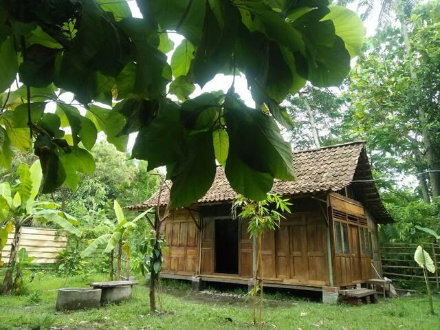 Banana House, an Intown Jungle. Room 01