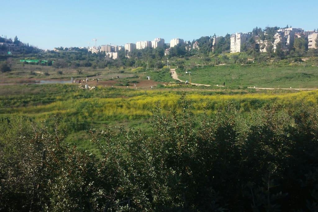 Nature area
