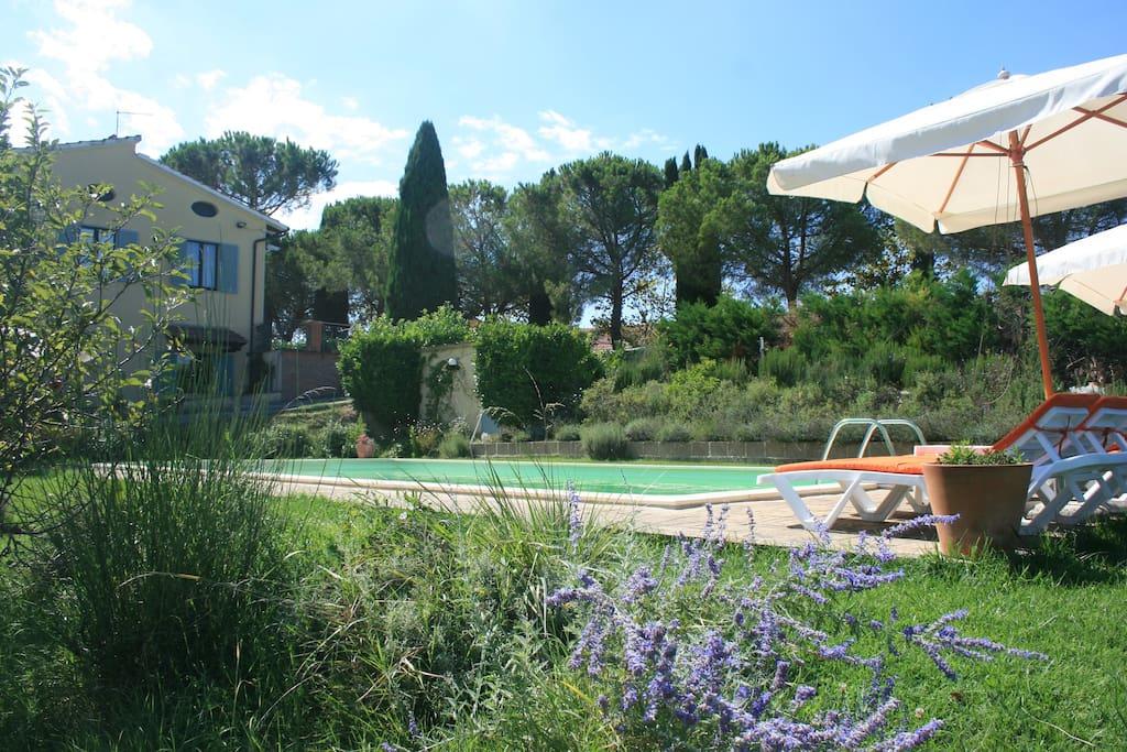 Piscine, villa et pins parasols !