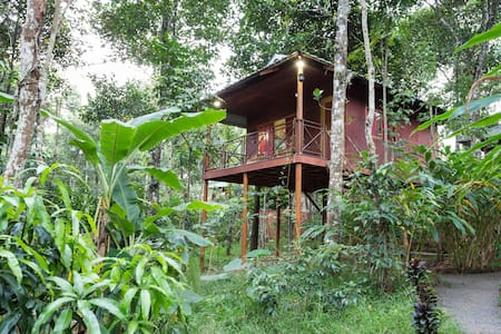 Eco friendly tree house - Kumily