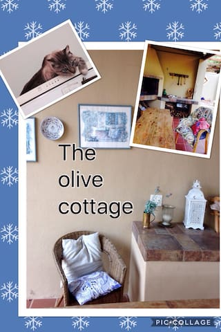 Olive Cottage encircled by the Overberg mountains