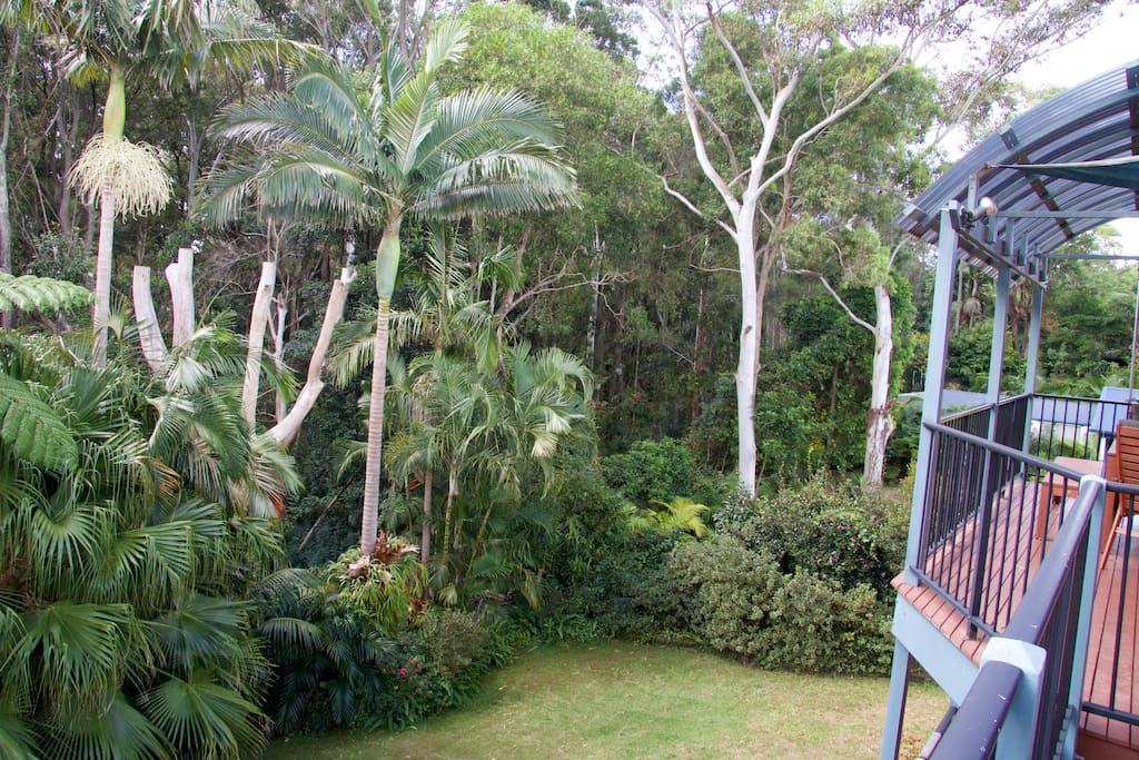 Garden backing on to koala corridor