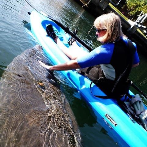 My wife in her kayak with a manatee in Crystal River.