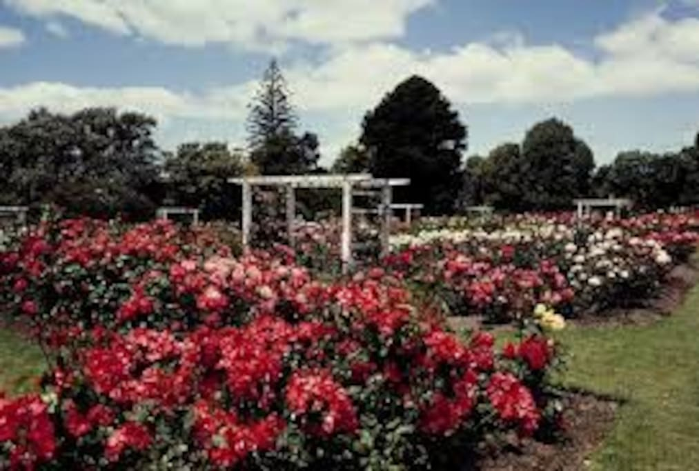 Parnell Rose Gardens in full spring bloom - a 10 minute walk away