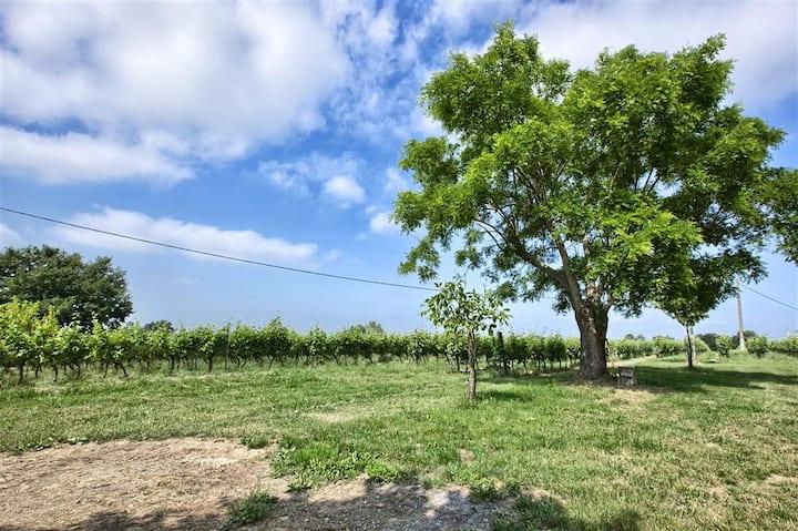 Gîte dans un vignoble en agriculture biologique