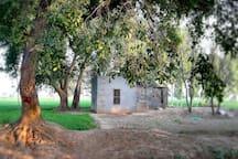 Chaudhary's Homestead
