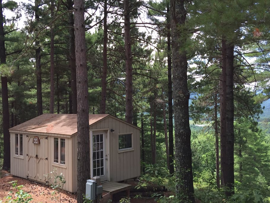 Nestled among the pines