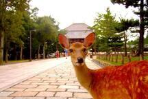 1 hour to Nara park by train