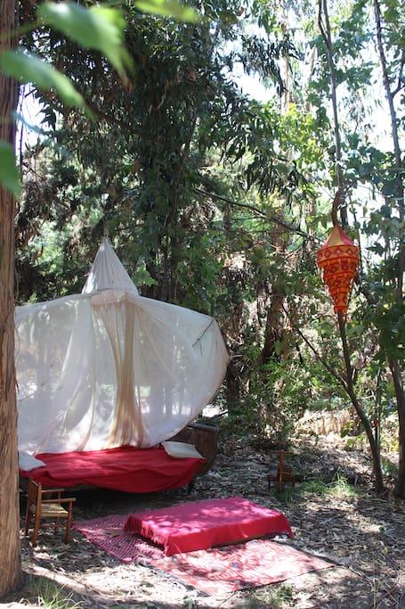 Jardin para descansar, ideal para recostarse, leer un libro y disfrutar del canto de los pájaros