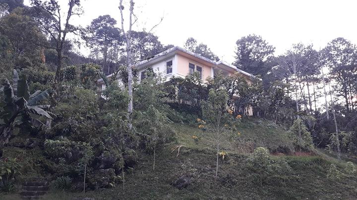 Liquidambar Hill