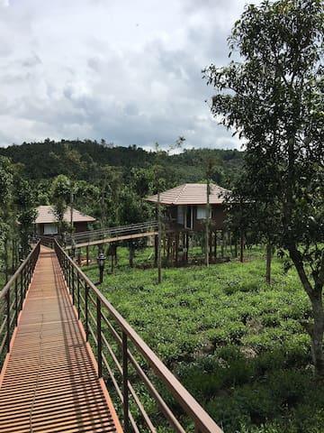 Harmony Farm Wayanad - Sky High Cottage 2