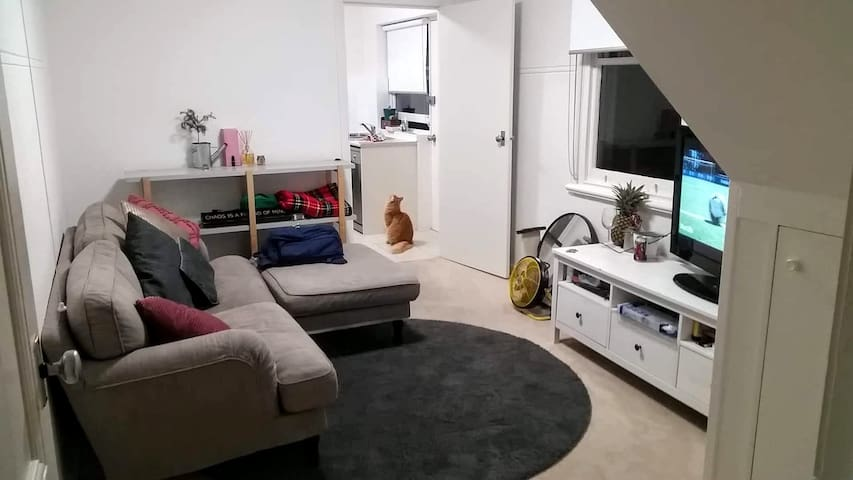 Loved and lived-in loungeroom that we come home to at the end of every working day. Plus, our gorgeous boy Leo, who I think has just spotted something he wants!