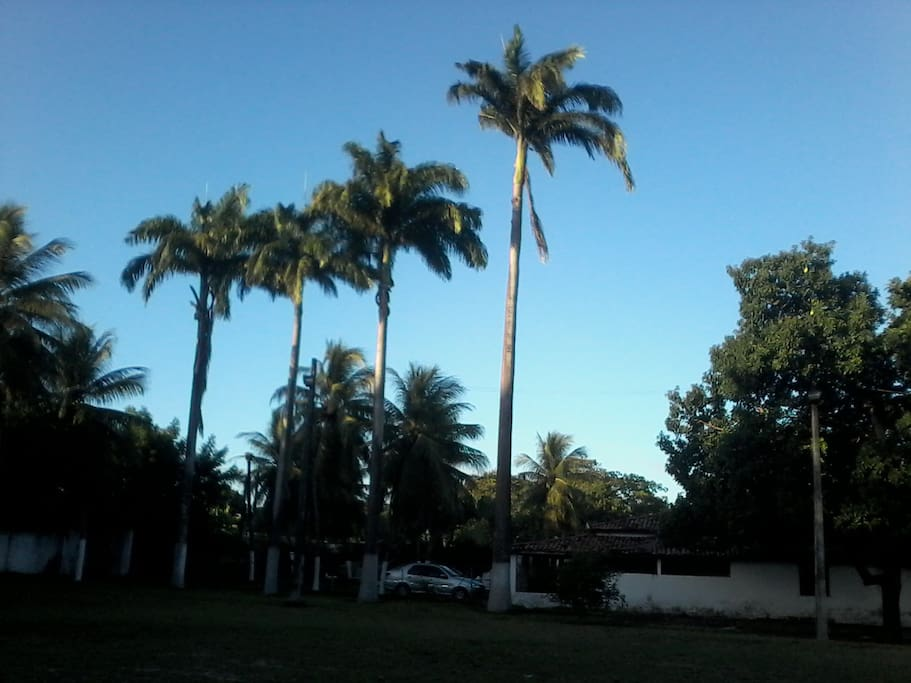 Amplo jardim com palmeiras imperiais e coqueiros