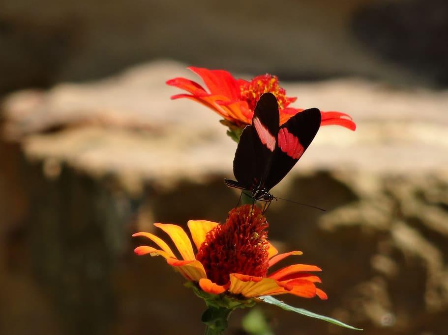 Mariposas de la finca