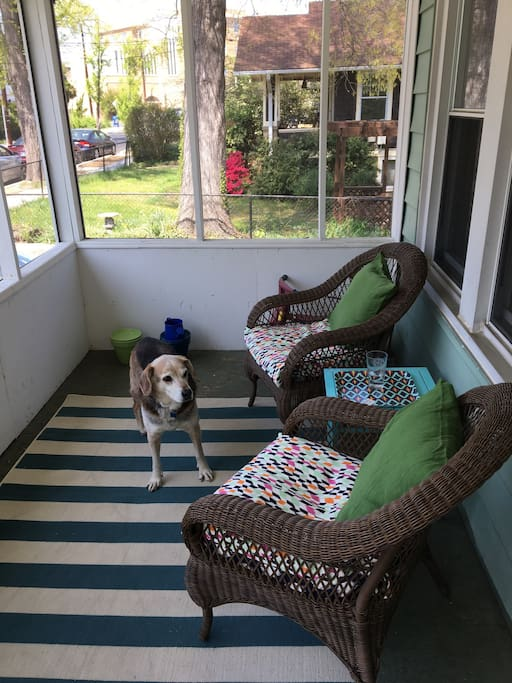 Screened-in front porch, dog not included.