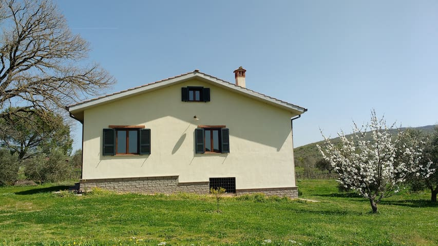 Mansard in the Tuscia countryside - Civitella Cesi - House