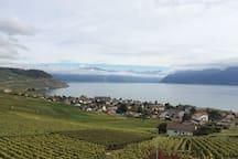 Lavaux: au milieux des vignes, vue lac et montagne