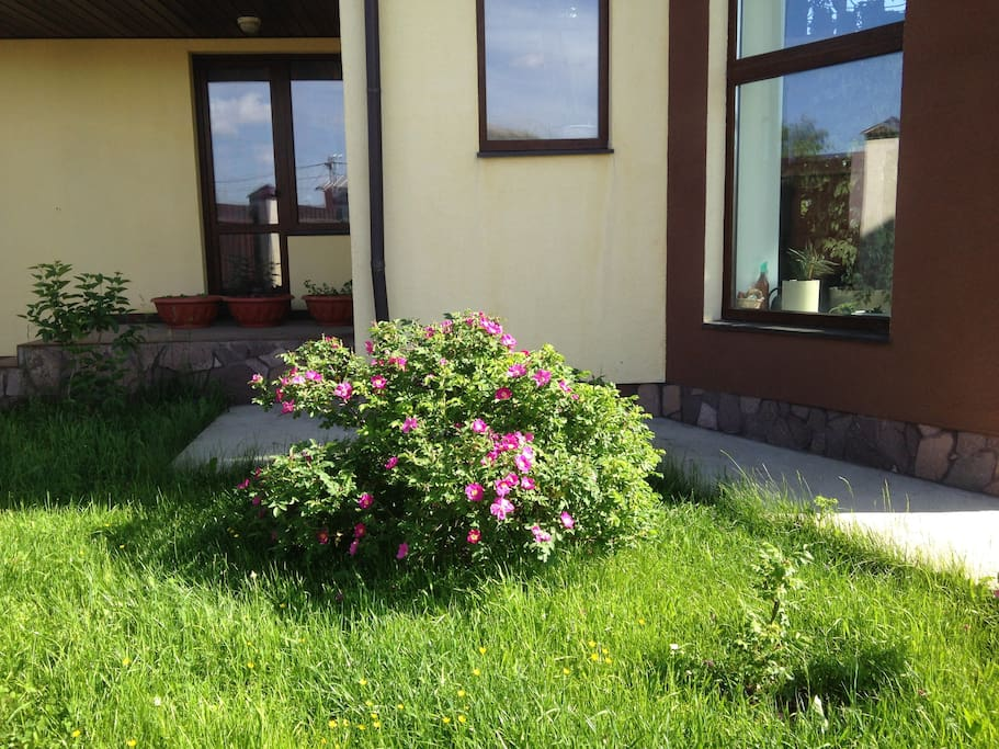 Garden near House