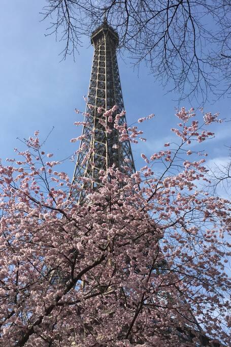Springtime at La Tour Eiffel