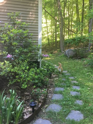 stone path to entryway and Samwise, one of two cats on the property