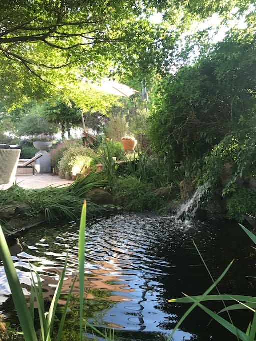 A large pond with a cascading waterfall under several different varieties of Japanese Maples.