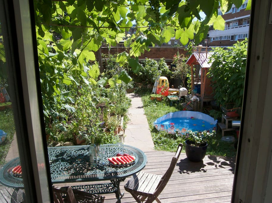 Back garden with grapes