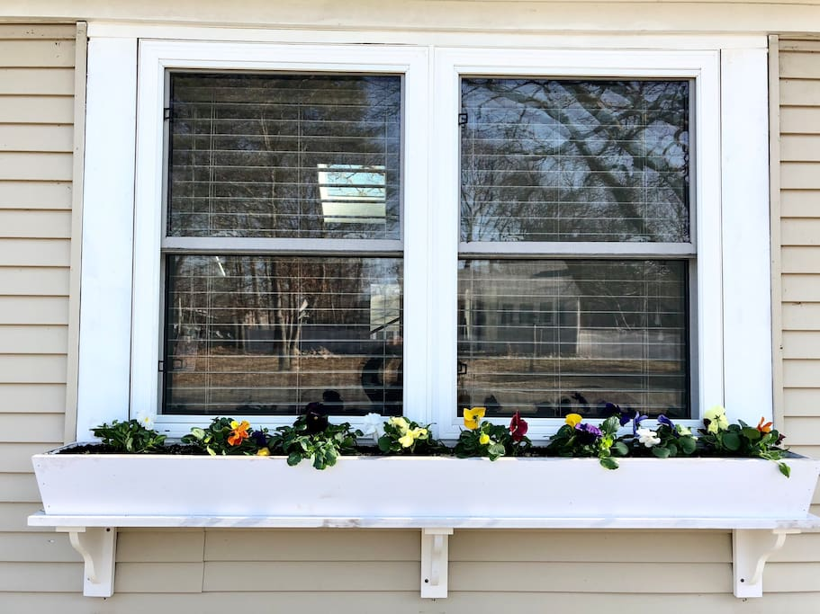 Beautiful new spring flower boxes