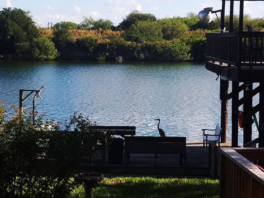 Fish cleaning station, dock, boat lift--Henry, the Blue Heron, will great you each morning!