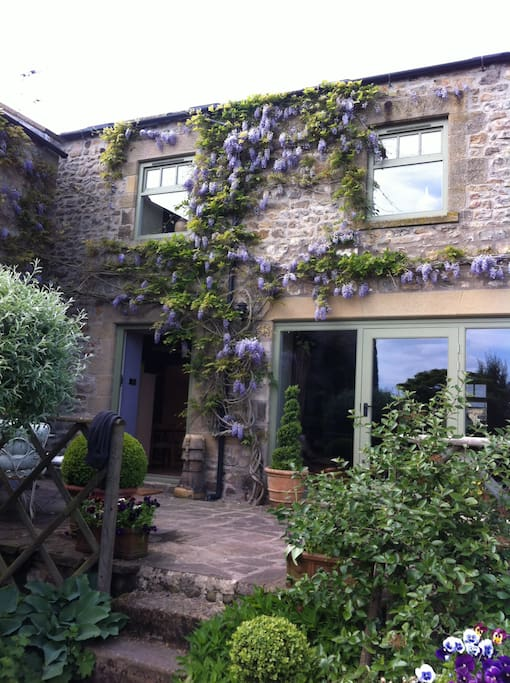 The main house wisteria in bloom