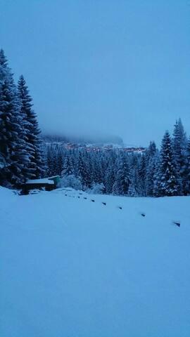 Chalet incantato nel parco Dolomiti - Danta - Bed & Breakfast