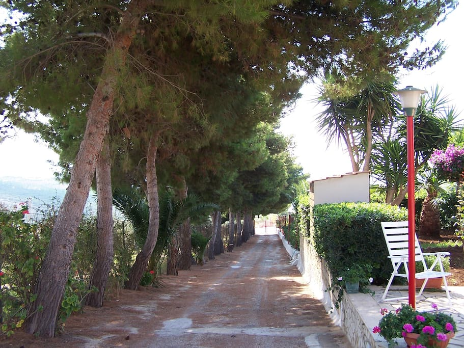 Viale di accesso alla villa.