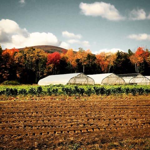 Equinox Farm, sustainable organic farm located just across the street.