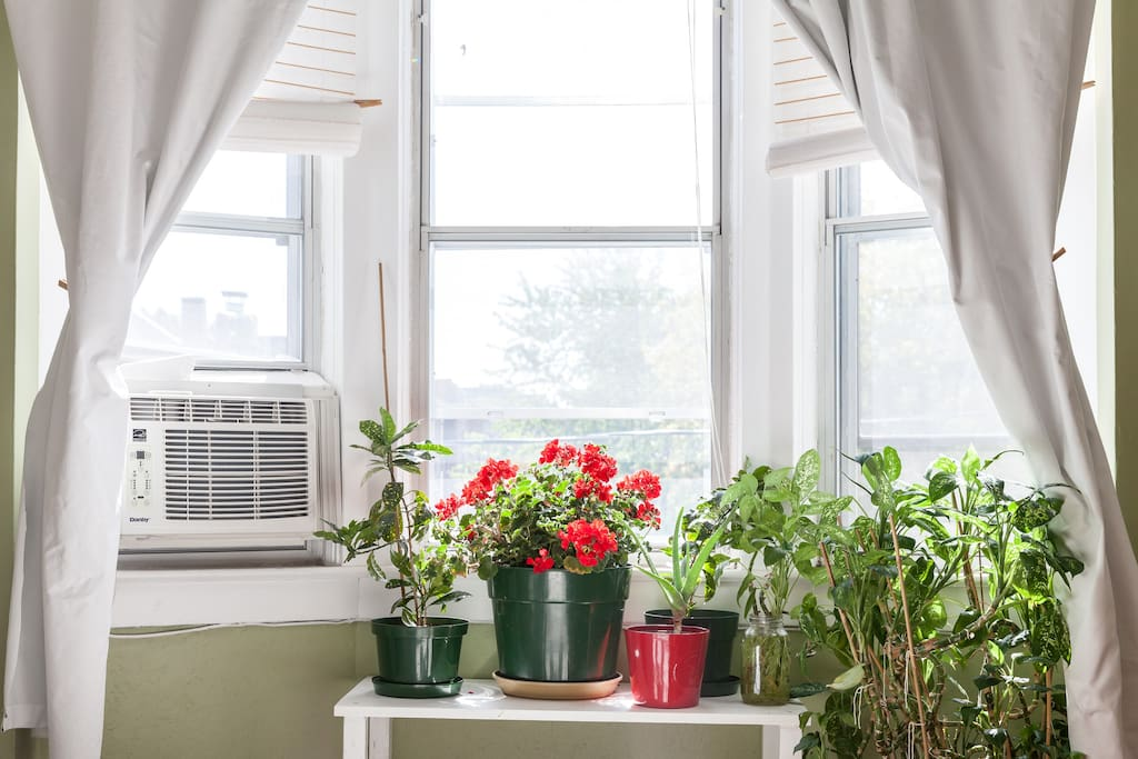 Plants clean the air and bring life to the room