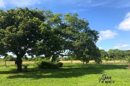 Brassavola Eco Park