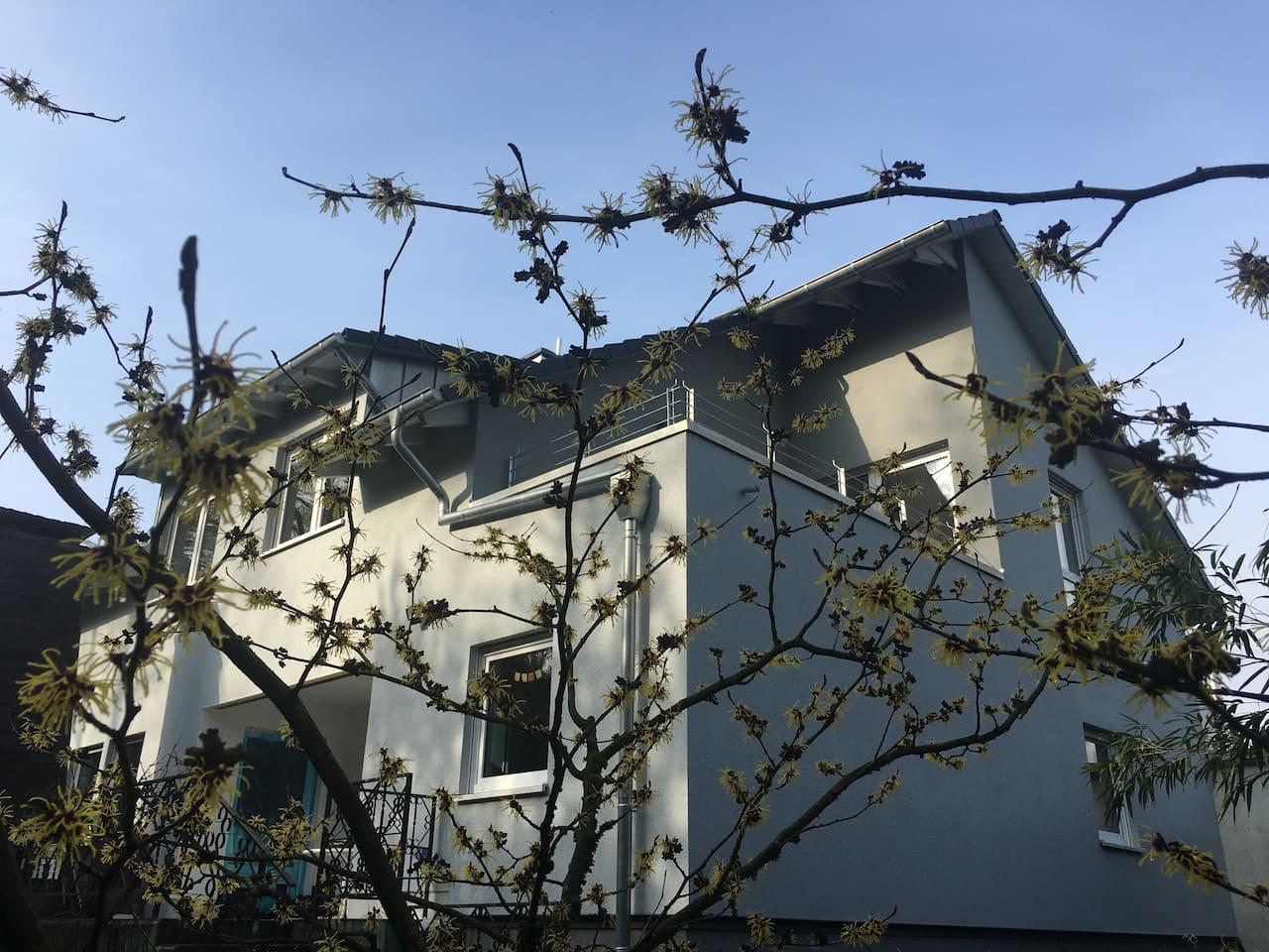 Blick aus dem Garten von der blühenden Zaubernuss zum Balkon im Osten (Sonne bis 13:00  Uhr)