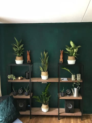 Our plants + Bluetooth speaker