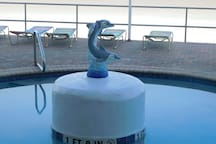 You can watch real Dolphins swim by from our pool deck on most mornings.