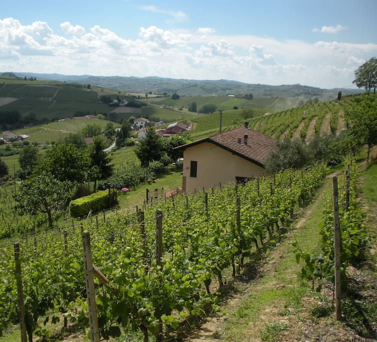 La cascina immersa nei vigneti - The house surrounded by vineyards