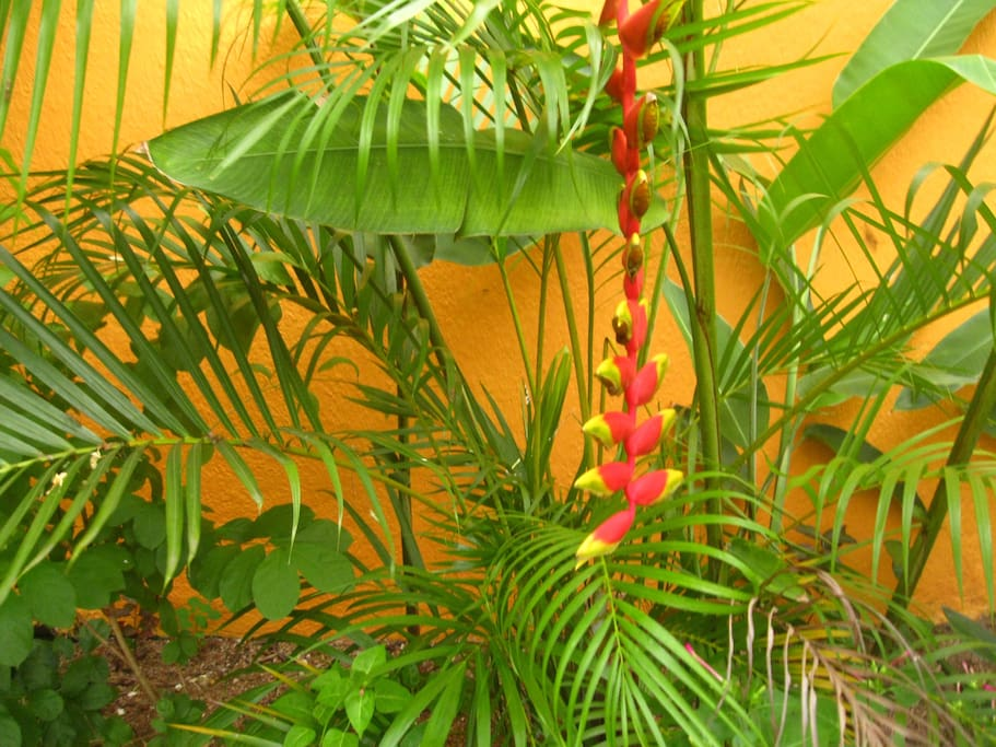 Tropical garden with quiet spaces and sit out areas to relax