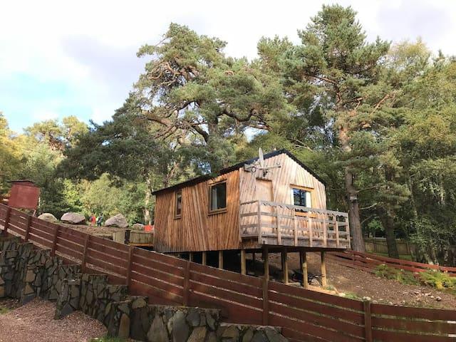 Glenmore Treehouse