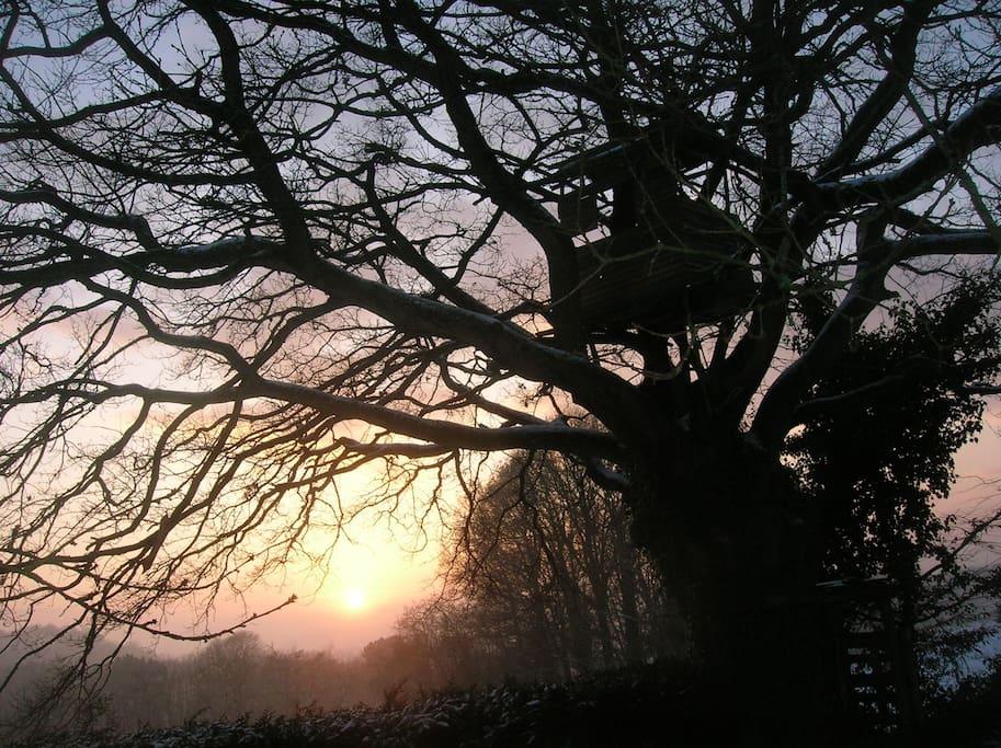 Parc-comportant-de-nombreux-arbres