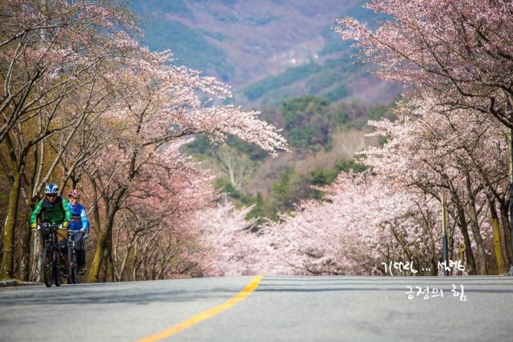 벚꽃길 from 블로그 --기다림... 설렘
