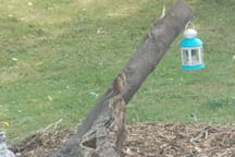 Our resident Chipmunk!