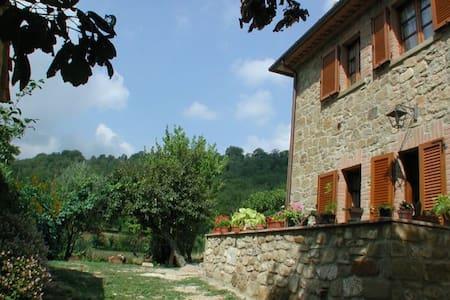 ASINELLO - Volterrano - Pis