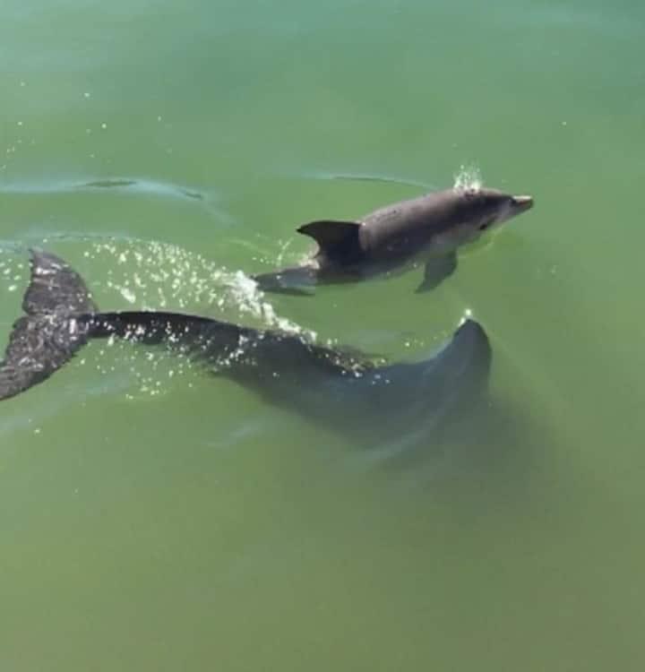 Mandurah Dolphin Escape