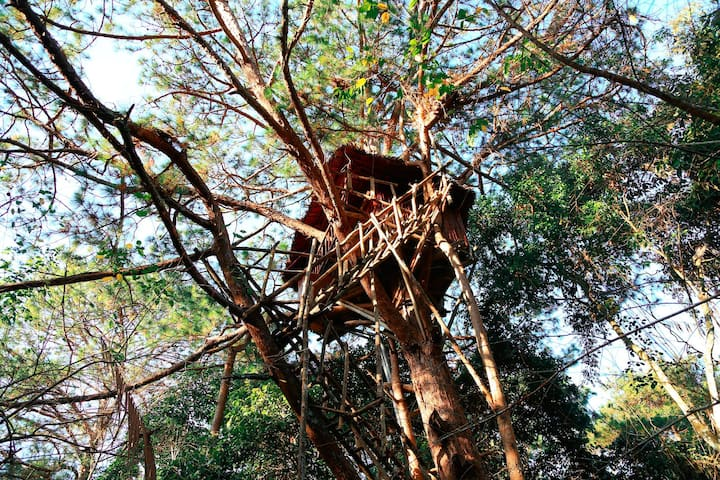 TREE HOUSE IN DEEP FOREST - 30M FROM THE GROUND