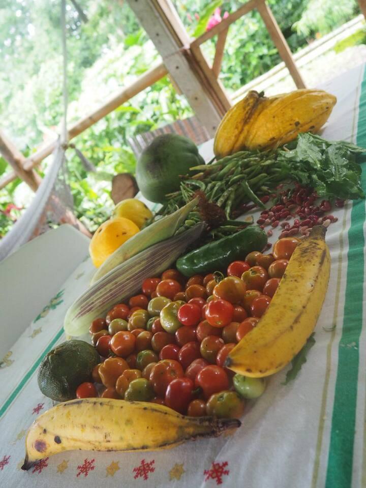 Recoleción de vegetales