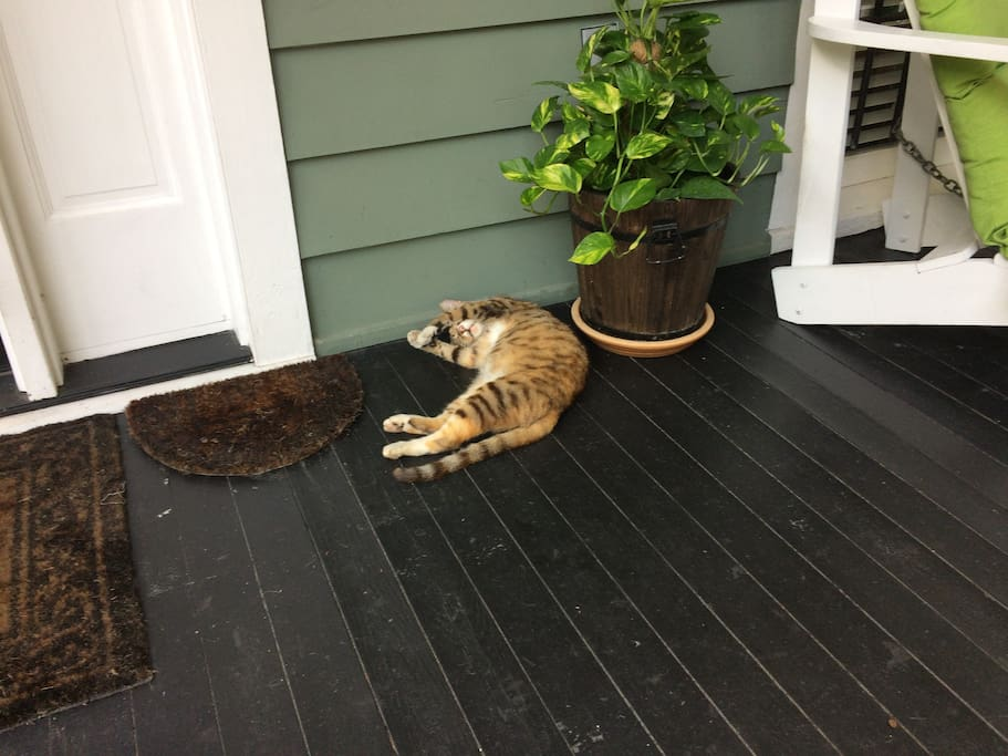 Billy, our watchful porch tiger. It's a feral cat who lives a happy life on our porch. She is very shy and does not want to be patted.